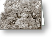 Sepia Greeting Cards - Oaks Greeting Card by Frank Tschakert