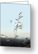 Feed Greeting Cards - Oat Grass 1 Greeting Card by Ellen Henneke