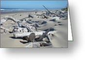 Popular Framed Prints Greeting Cards - Ocean Coastal art prints Driftwood Beach Greeting Card by Baslee Troutman Fine Art Photography