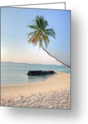 White Sand Greeting Cards - Ocean Palm Greeting Card by Shawn Everhart