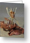 Acrylic Paint Sculpture Greeting Cards - Ocean Spider Greeting Card by Ruth Edward Anderson