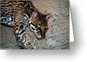 Noth Greeting Cards - Ocelot Greeting Card by Thea Gilliam