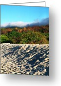 Theory Of Evolution Greeting Cards - Ochoa Beach Greeting Card by Thomas R Fletcher