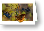 Out Of Frame Greeting Cards - October Delight Greeting Card by Ron Jones