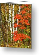 October Greeting Cards - October Fling Greeting Card by Bill Morgenstern