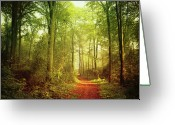 Dirt Road Greeting Cards - October Forest Greeting Card by Dirk Wüstenhagen Imagery