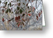Linda Seacord Greeting Cards - October Frost Greeting Card by Linda Seacord
