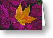 Fallen Leaf Greeting Cards - October Hues Greeting Card by Paul Wear