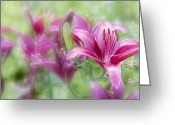 Flowers Photographs Greeting Cards - Oh so pink Greeting Card by Toni Hopper