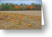 Pumpkin Farm Greeting Cards - Ohio Pumpkin Patch Greeting Card by Peter  McIntosh