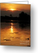 Gloaming Greeting Cards - Okavango Delta Sunset Greeting Card by Maria Adelaide Silva
