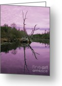 Lake Photographs Greeting Cards - Okefenokee Greeting Card by Jim Wright