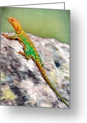 Lizard Greeting Cards - Oklahoma Collared Lizard Greeting Card by Jeff Kolker