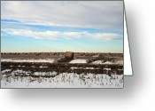 Feed Greeting Cards - Oklahoma Hay Field Greeting Card by Ellen Henneke