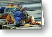 Iguana Greeting Cards - Old And Weary Greeting Card by Karen Wiles