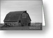 Old Barns Pyrography Greeting Cards - Old Barn in winter Greeting Card by Yumi Johnson