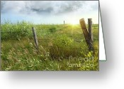 Wild Grass Greeting Cards - Old country fence on the prairies Greeting Card by Sandra Cunningham