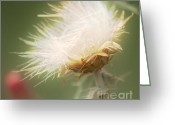 Flowery Greeting Cards - Old Fuzzy head Greeting Card by Julie Lueders