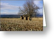 Cornfield Photo Greeting Cards - Old hut isolated in a field. Auvergne. France Greeting Card by Bernard Jaubert