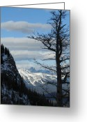 Rows Of Peaks Greeting Cards - Old Larch Tree Has Best View Greeting Card by Greg Hammond