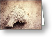 Shell Texture Greeting Cards - Old memories Greeting Card by Kristin Kreet
