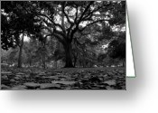 Live Art Greeting Cards - Old Savannah Greeting Card by David Lee Thompson