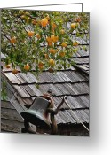 Twine Greeting Cards - Old School Bell Neath the Orange Tree Greeting Card by DigiArt Diaries by Vicky Browning