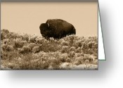 Buffalo Greeting Cards - Old Timer Greeting Card by Shane Bechler