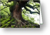 Old Tree Greeting Cards - Old Tree in Kyoto Greeting Card by Carol Groenen