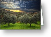 South France Greeting Cards - Olive Tree Background Greeting Card by Gualtiero Boffi