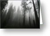 National Forest Greeting Cards - Ominous Trees In  Forest Greeting Card by Susan Gary