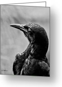 Ocularperceptions Greeting Cards - On Alert - BW Greeting Card by Christopher Holmes