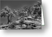 Black Mesa Greeting Cards - On Alert Greeting Card by Stephen Campbell