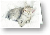 Gray Tabby Greeting Cards - On Cloud Nine Greeting Card by Amy Tyler