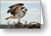 Seabirds Digital Art Greeting Cards - On Guard Greeting Card by Heather Thorning