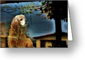 Cocker Spaniel Greeting Cards - On Guard Greeting Card by Helen Carson