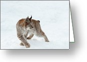 Wild Cat Greeting Cards - On High Alert Greeting Card by Sandra Bronstein