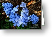 Florida Flowers Greeting Cards - On the Forest Floor Greeting Card by Julie Dant