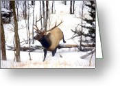 Elk Greeting Cards - On the Move Greeting Card by Mike  Dawson