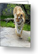 Paws Digital Art Greeting Cards - On the prowl Greeting Card by Gordon Dean II