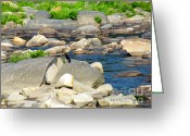 Randi Shenkman Greeting Cards - On the Rock Greeting Card by Randi Shenkman