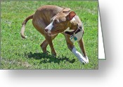 K9 Greeting Cards - On the Run Greeting Card by Lisa  Phillips