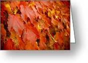 Turning Leaves Greeting Cards - On the Wall Greeting Card by Christi Kraft