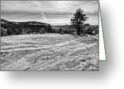 Pine Tree Greeting Cards - On the Way to Subway Greeting Card by Chad Dutson