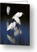 Great Egrets Greeting Cards - One Chilly Morning Greeting Card by LaMarre Labadie