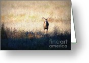 Fawns Greeting Cards - One Cute Deer Greeting Card by Carol Groenen