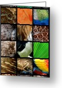Palm Leaf Greeting Cards - One Day at the Zoo Greeting Card by Michelle Calkins