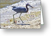Fiddler Crab Greeting Cards - One Fiddle Down Greeting Card by East Coast Barrier Islands Betsy A Cutler