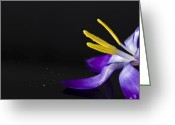 Yellow Crocus Greeting Cards - One Flower Greeting Card by Svetlana Sewell