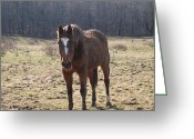 Log Cabin Photographs Photo Greeting Cards - One Funny Horse Greeting Card by Robert Margetts